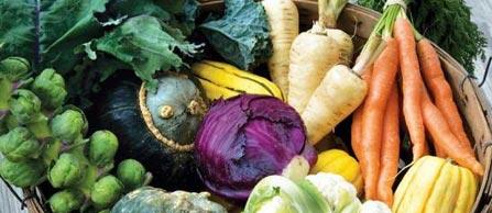 fall-garden-vegetables