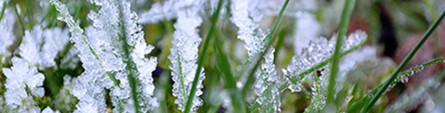 Frost On Grass - Small Web