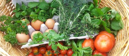 sustainable-gardening