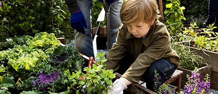 Child planting vegetable garden