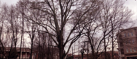 Downtown-Picturesque-Tree