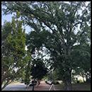 Tree Square